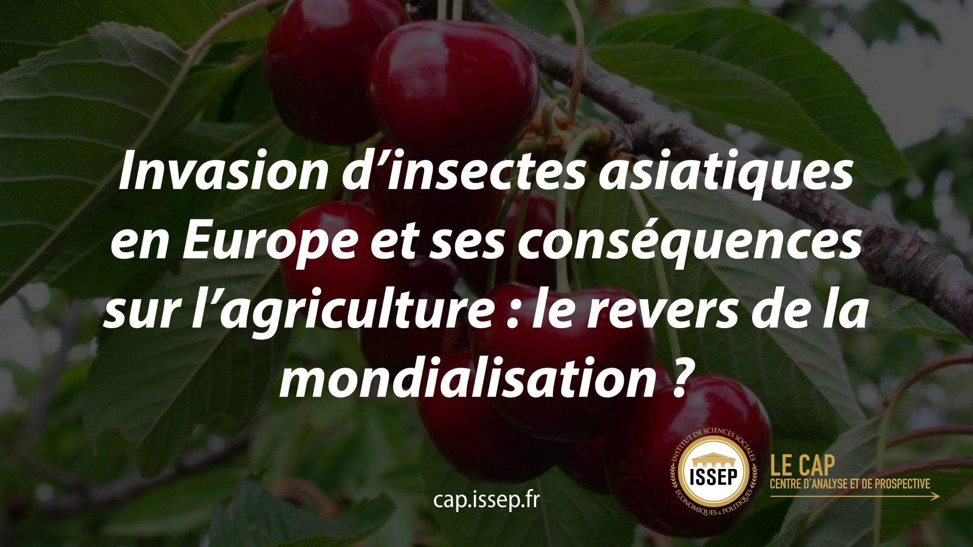 Note d'actualité | Invasion d'insectes asiatiques en Europe et ses conséquences sur l'agriculture : le revers de la mondialisation ? | CAP de l'ISSEP
